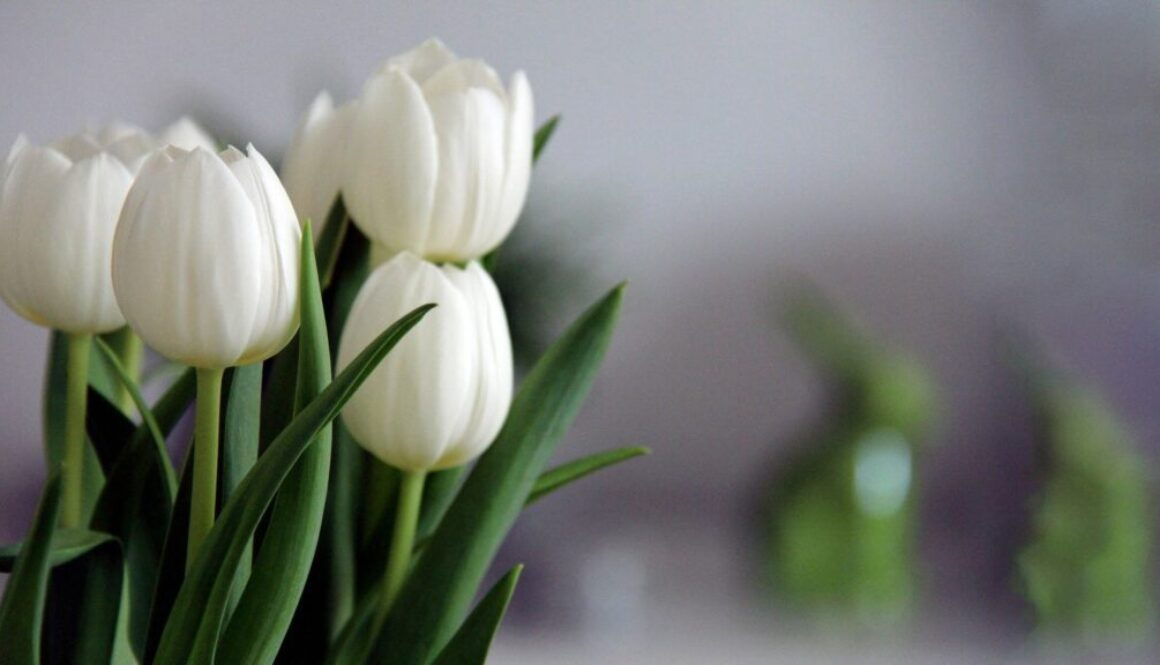 tulips-4112431_1920