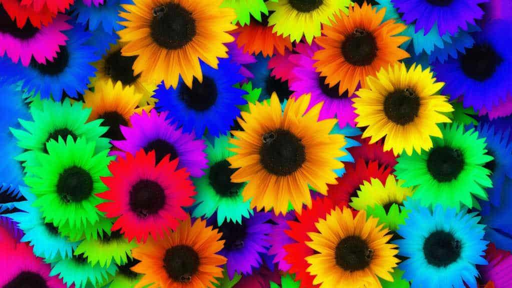sunflower-139535_1920